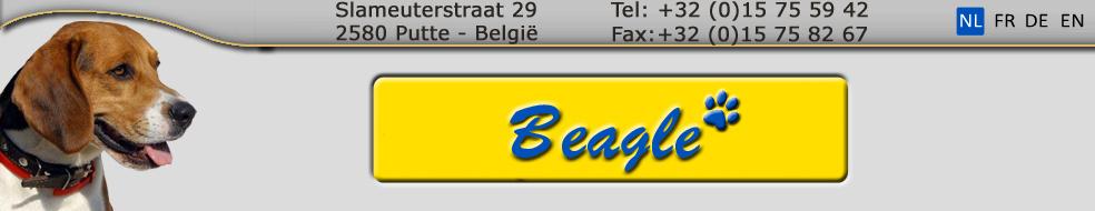 beagle puppies te koop
